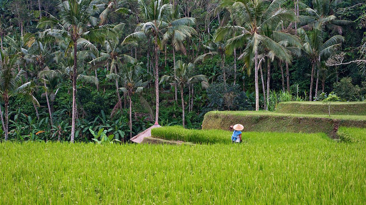 About Villa Bali Biz